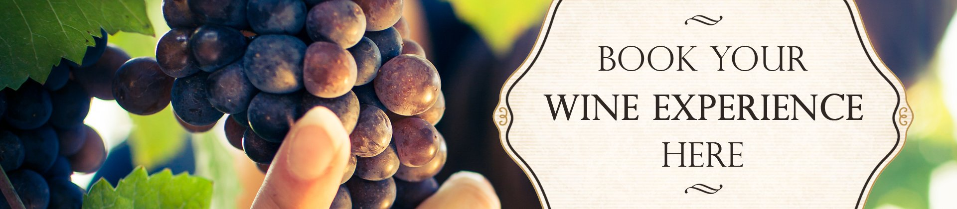 Book Your Wine Routes